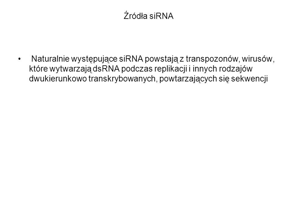 Źródła siRNA Naturalnie występujące siRNA powstają z transpozonów, wirusów, które wytwarzają dsRNA podczas replikacji i innych rodzajów dwukierunkowo