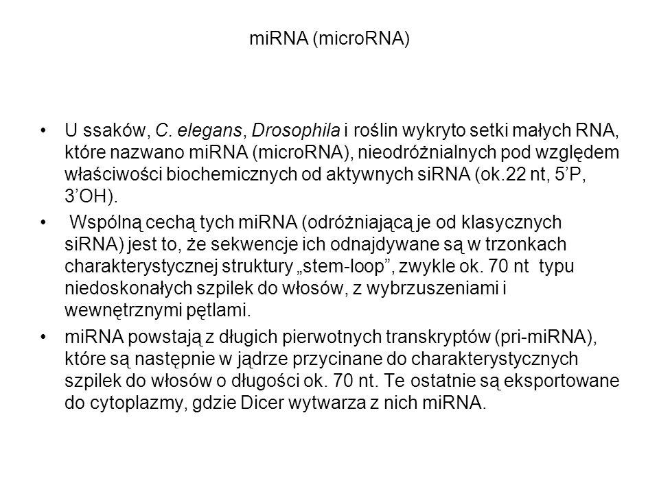 miRNA (microRNA) U ssaków, C. elegans, Drosophila i roślin wykryto setki małych RNA, które nazwano miRNA (microRNA), nieodróżnialnych pod względem wła