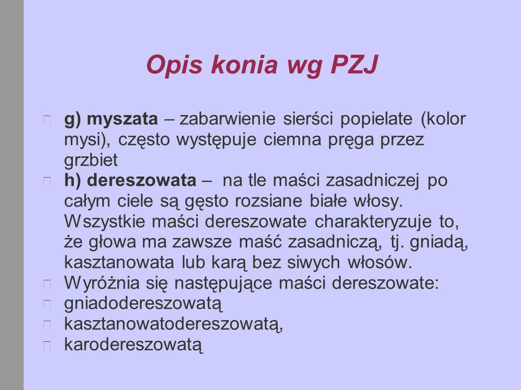 c) Łysina.