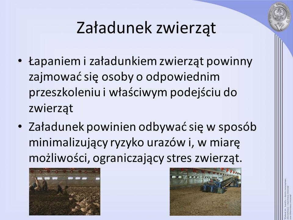 Załadunek zwierząt Łapaniem i załadunkiem zwierząt powinny zajmować się osoby o odpowiednim przeszkoleniu i właściwym podejściu do zwierząt Załadunek
