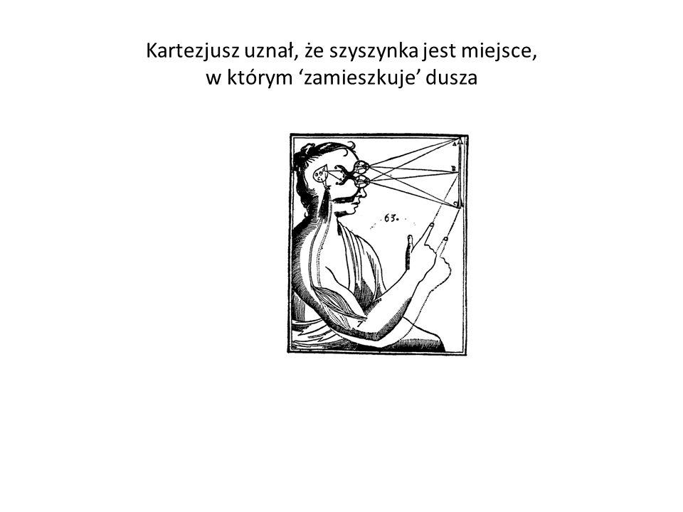 Kartezjusz uznał, że szyszynka jest miejsce, w którym zamieszkuje dusza