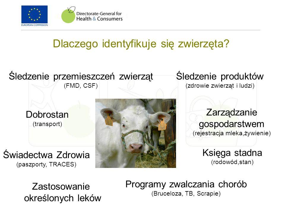 Dlaczego identyfikuje się zwierzęta? Śledzenie przemieszczeń zwierząt (FMD, CSF) Dobrostan (transport) Zarządzanie gospodarstwem (rejestracja mleka,ży