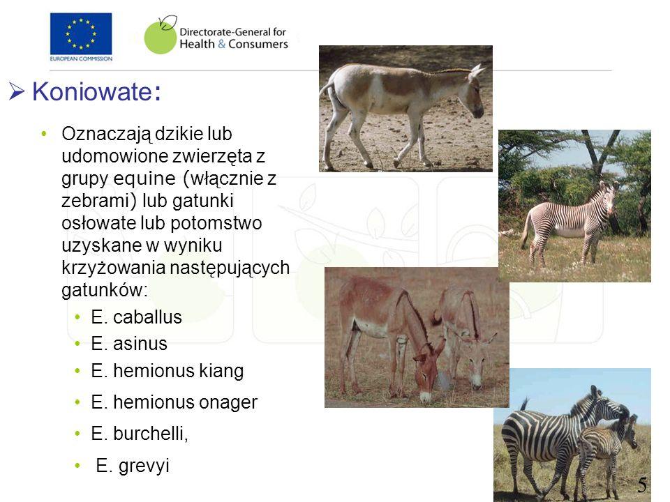 Koniowate : Oznaczają dzikie lub udomowione zwierzęta z grupy equine ( włącznie z zebrami ) lub gatunki osłowate lub potomstwo uzyskane w wyniku krzyż