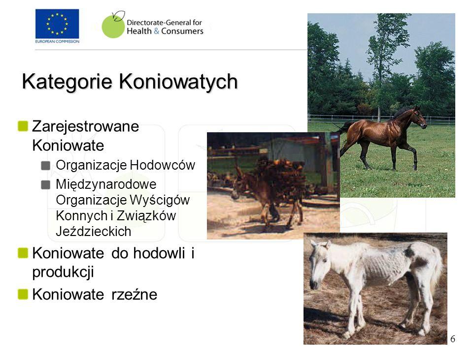 Zarejestrowane Koniowate Organizacje Hodowców Międzynarodowe Organizacje Wyścigów Konnych i Związków Jeździeckich Koniowate do hodowli i produkcji Kon