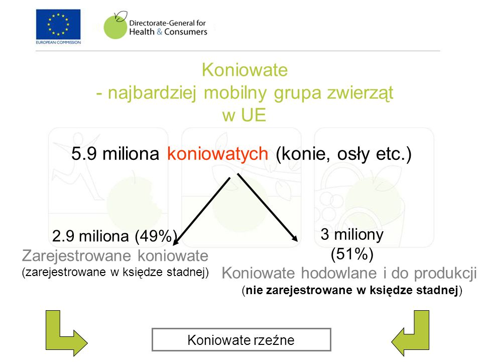 Koniowate - najbardziej mobilny grupa zwierząt w UE 5.9 miliona koniowatych (konie, osły etc.) 2.9 miliona (49%) Zarejestrowane koniowate (zarejestrow