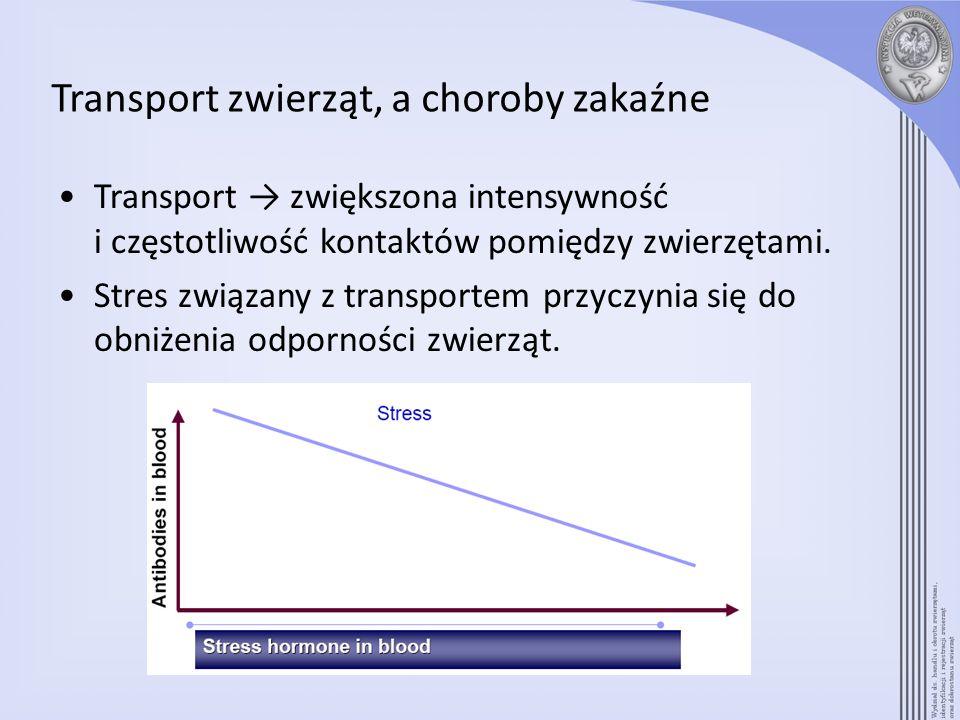 Transport zwierząt, a choroby zakaźne Transport zwiększona intensywność i częstotliwość kontaktów pomiędzy zwierzętami. Stres związany z transportem p
