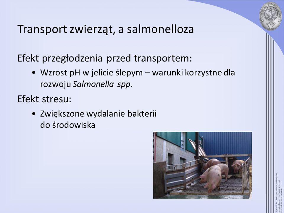 Transport zwierząt, a salmonelloza Efekt przegłodzenia przed transportem: Wzrost pH w jelicie ślepym – warunki korzystne dla rozwoju Salmonella spp. E