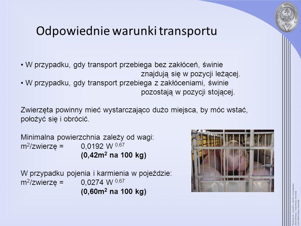 Odpowiednie warunki transportu W przypadku, gdy transport przebiega bez zakłóceń, świnie znajdują się w pozycji leżącej. W przypadku, gdy transport pr