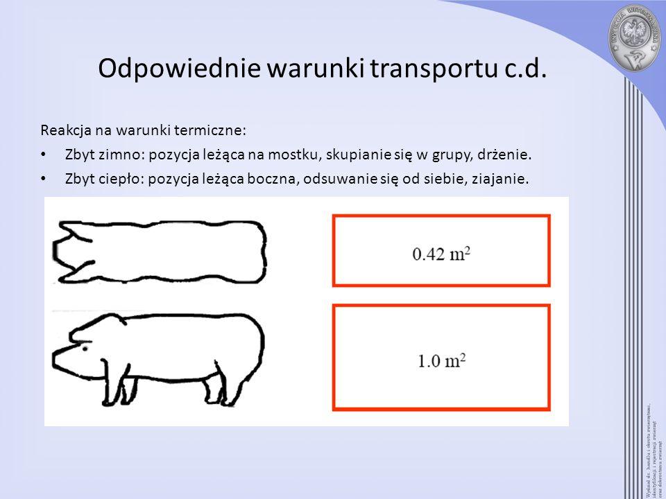 Odpowiednie warunki transportu c.d. Reakcja na warunki termiczne: Zbyt zimno: pozycja leżąca na mostku, skupianie się w grupy, drżenie. Zbyt ciepło: p