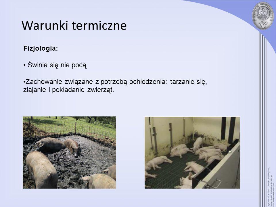 Warunki termiczne Fizjologia: Świnie się nie pocą Zachowanie związane z potrzebą ochłodzenia: tarzanie się, ziajanie i pokładanie zwierząt.
