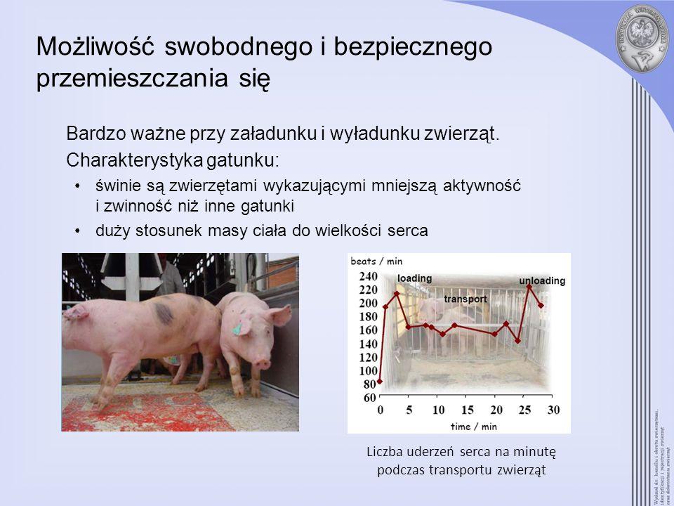Możliwość swobodnego i bezpiecznego przemieszczania się Bardzo ważne przy załadunku i wyładunku zwierząt. Charakterystyka gatunku: świnie są zwierzęta