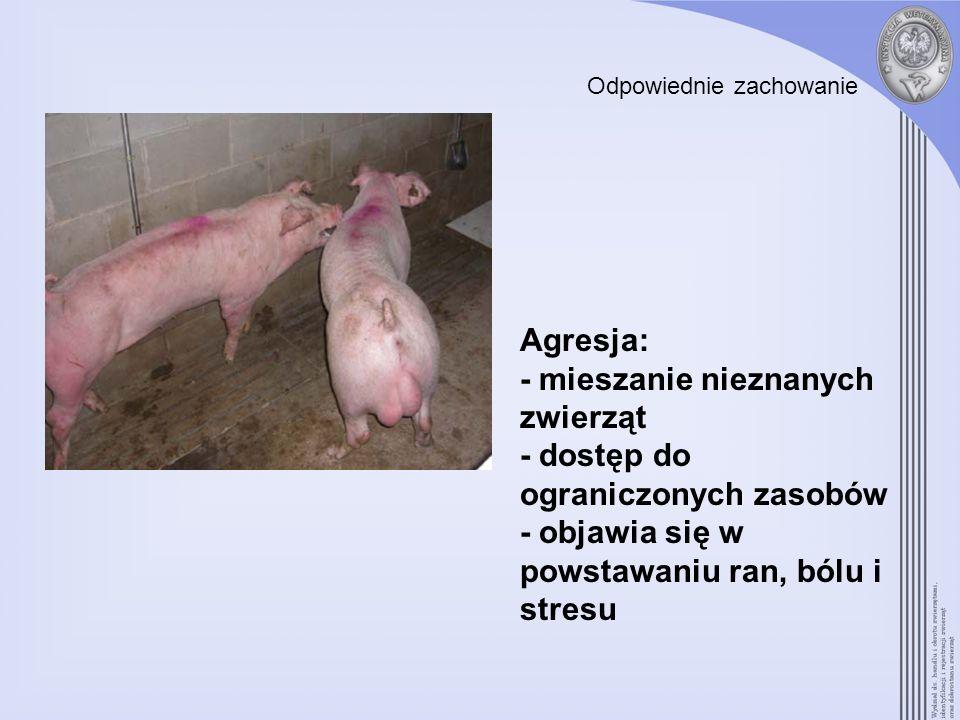 Odpowiednie zachowanie Agresja: - mieszanie nieznanych zwierząt - dostęp do ograniczonych zasobów - objawia się w powstawaniu ran, bólu i stresu