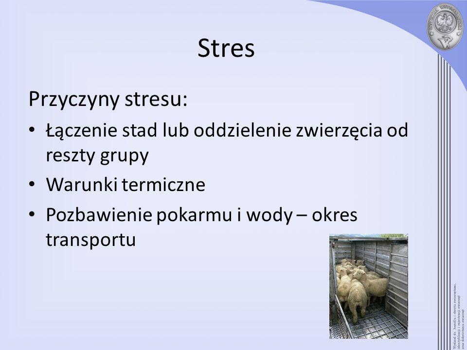 Stres Przyczyny stresu: Łączenie stad lub oddzielenie zwierzęcia od reszty grupy Warunki termiczne Pozbawienie pokarmu i wody – okres transportu