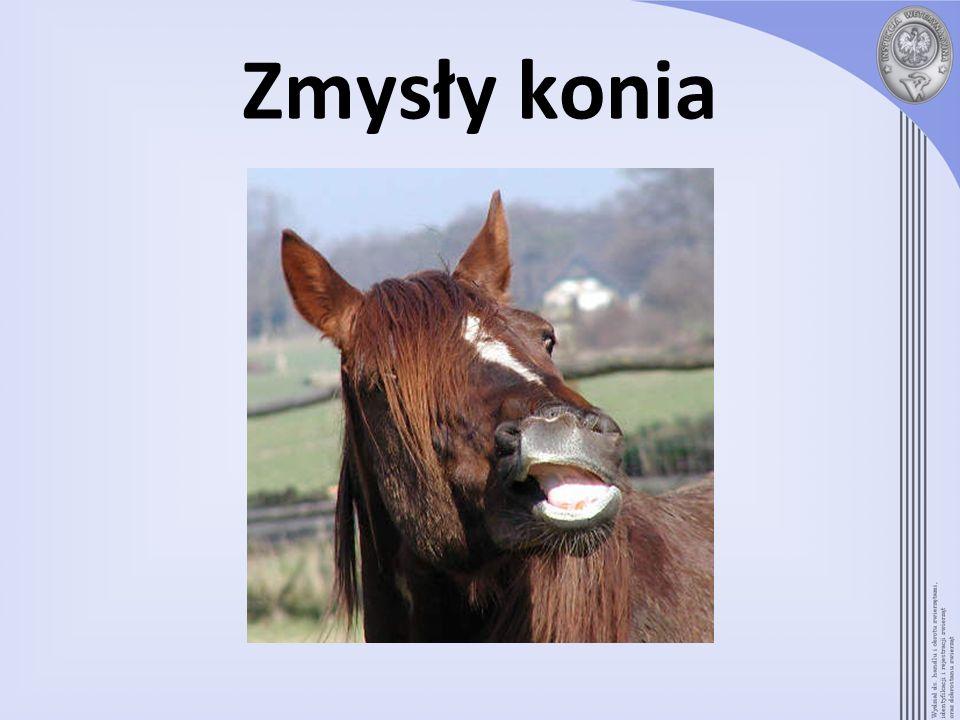 Zmysły konia