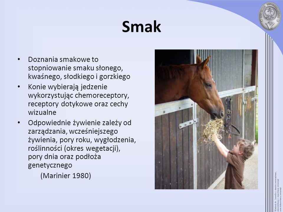 Smak Doznania smakowe to stopniowanie smaku słonego, kwaśnego, słodkiego i gorzkiego Konie wybierają jedzenie wykorzystując chemoreceptory, receptory