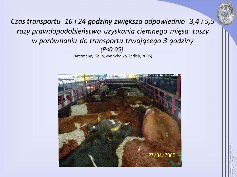Czas transportu 16 i 24 godziny zwiększa odpowiednio 3,4 i5,5 (P<0,05). (Amtmann,Gallo,vanSchaikyTadich,2006) Czas transportu 16 i 24 godziny zwiększa