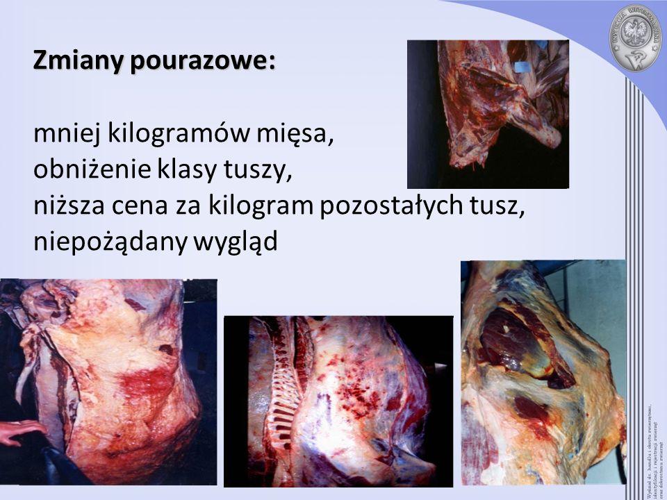 Zmiany pourazowe: Zmiany pourazowe: mniej kilogramów mięsa, obniżenie klasy tuszy, niższa cena za kilogram pozostałych tusz, niepożądany wygląd