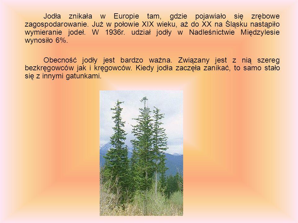 Jodła znikała w Europie tam, gdzie pojawiało się zrębowe zagospodarowanie. Już w połowie XIX wieku, aż do XX na Śląsku nastąpiło wymieranie jodeł. W 1