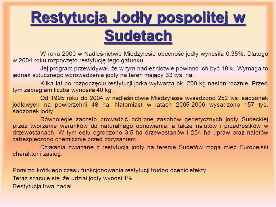 Restytucja Jodły pospolitej w Sudetach W roku 2000 w Nadleśnictwie Międzylesie obecność jodły wynosiła 0,35%. Dlatego w 2004 roku rozpoczęto restytucj