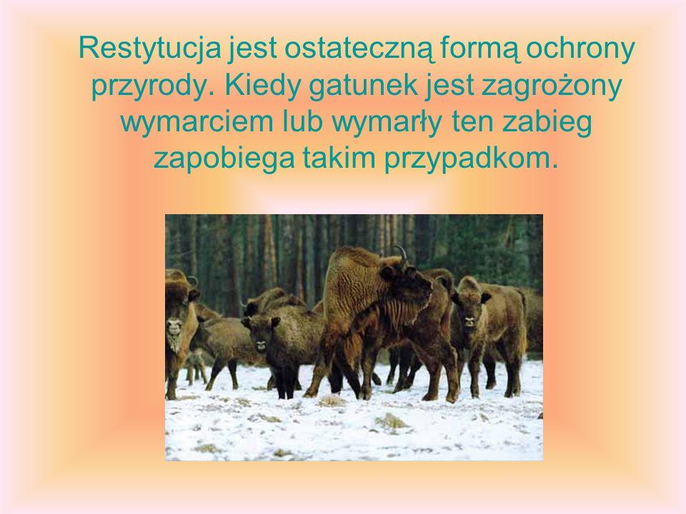 Restytucja jest ostateczną formą ochrony przyrody. Kiedy gatunek jest zagrożony wymarciem lub wymarły ten zabieg zapobiega takim przypadkom.