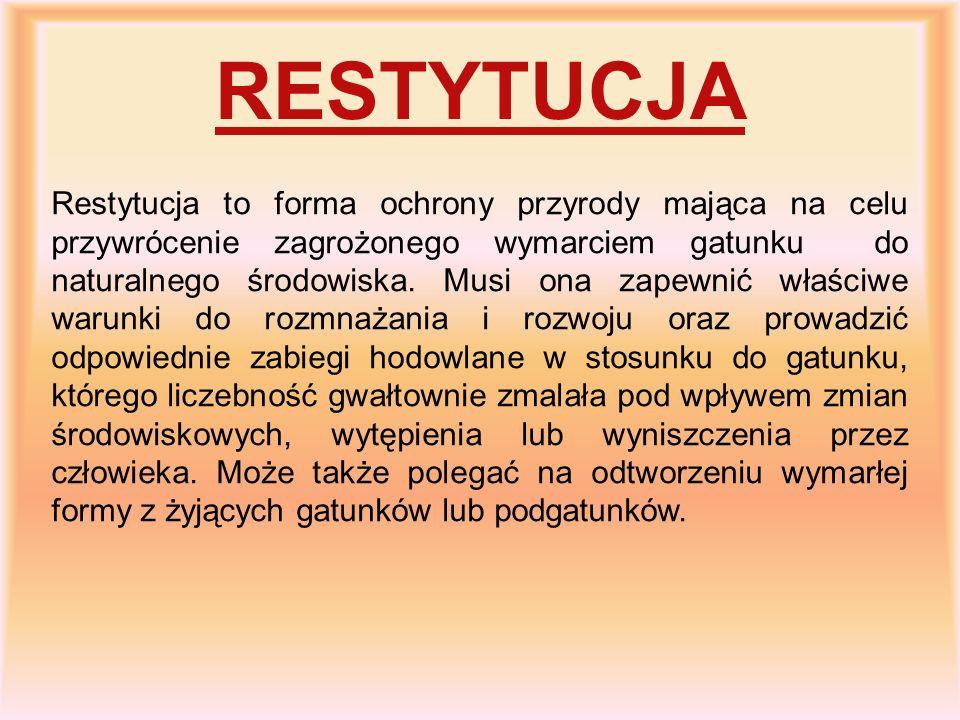 RESTYTUCJA Restytucja to forma ochrony przyrody mająca na celu przywrócenie zagrożonego wymarciem gatunku do naturalnego środowiska. Musi ona zapewnić