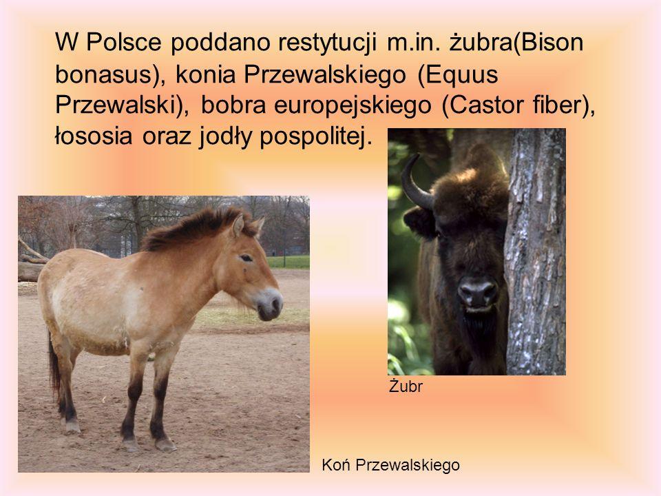 W Polsce poddano restytucji m.in. żubra(Bison bonasus), konia Przewalskiego (Equus Przewalski), bobra europejskiego (Castor fiber), łososia oraz jodły