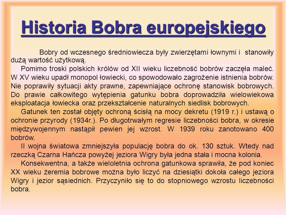 Historia Bobra europejskiego Bobry od wczesnego średniowiecza były zwierzętami łownymi i stanowiły dużą wartość użytkową. Pomimo troski polskich króló