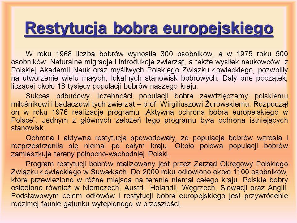 Restytucja bobra europejskiego W roku 1968 liczba bobrów wynosiła 300 osobników, a w 1975 roku 500 osobników. Naturalne migracje i introdukcje zwierzą