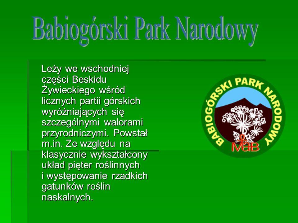 Leży we wschodniej części Beskidu Żywieckiego wśród licznych partii górskich wyróżniających się szczególnymi walorami przyrodniczymi. Powstał m.in. Ze