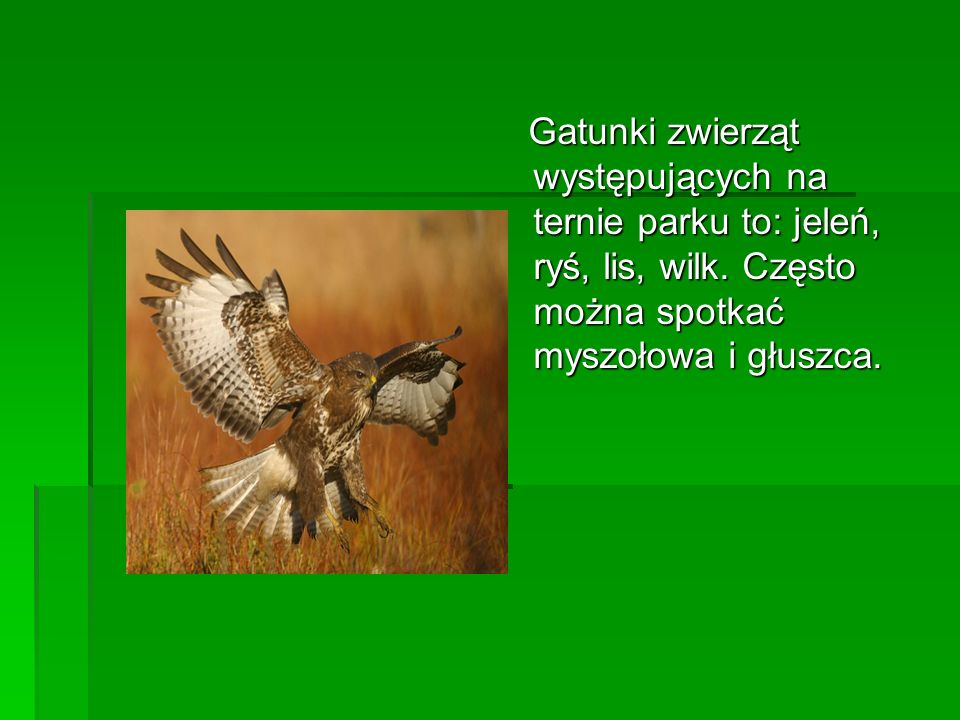 Gatunki zwierząt występujących na ternie parku to: jeleń, ryś, lis, wilk. Często można spotkać myszołowa i głuszca. Gatunki zwierząt występujących na