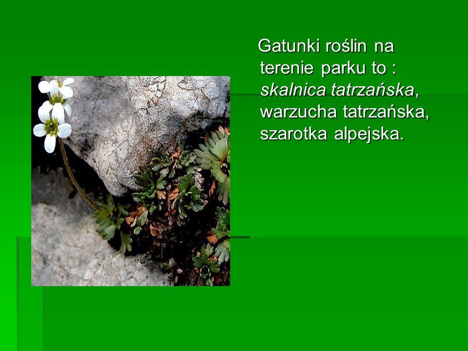 Gatunki roślin na terenie parku to : skalnica tatrzańska, warzucha tatrzańska, szarotka alpejska. Gatunki roślin na terenie parku to : skalnica tatrza