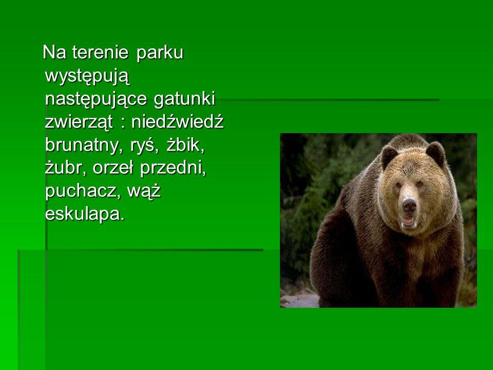 Na terenie parku występują następujące gatunki zwierząt : niedźwiedź brunatny, ryś, żbik, żubr, orzeł przedni, puchacz, wąż eskulapa. Na terenie parku