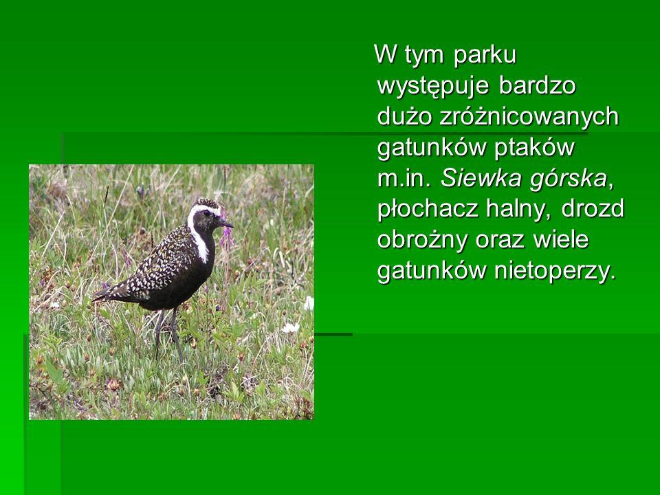 W tym parku występuje bardzo dużo zróżnicowanych gatunków ptaków m.in. Siewka górska, płochacz halny, drozd obrożny oraz wiele gatunków nietoperzy. W