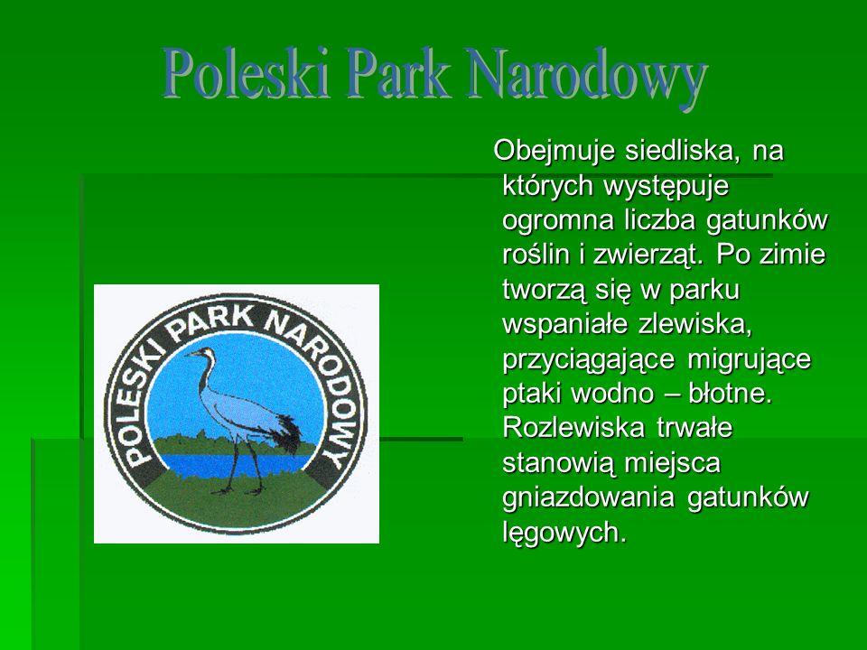 Obejmuje siedliska, na których występuje ogromna liczba gatunków roślin i zwierząt. Po zimie tworzą się w parku wspaniałe zlewiska, przyciągające migr