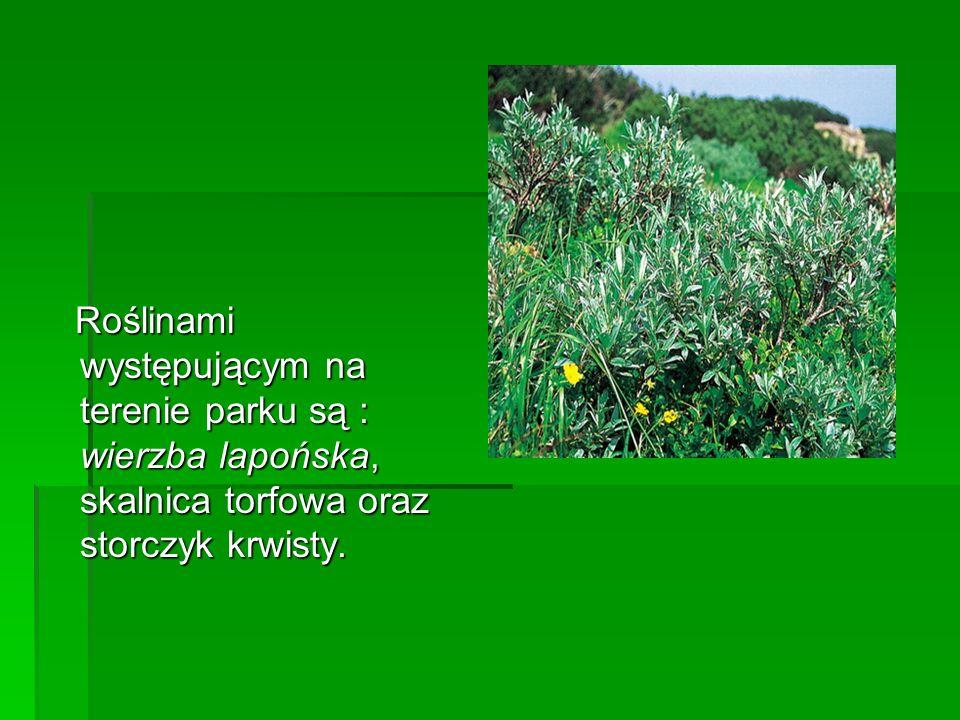 Roślinami występującym na terenie parku są : wierzba lapońska, skalnica torfowa oraz storczyk krwisty. Roślinami występującym na terenie parku są : wi