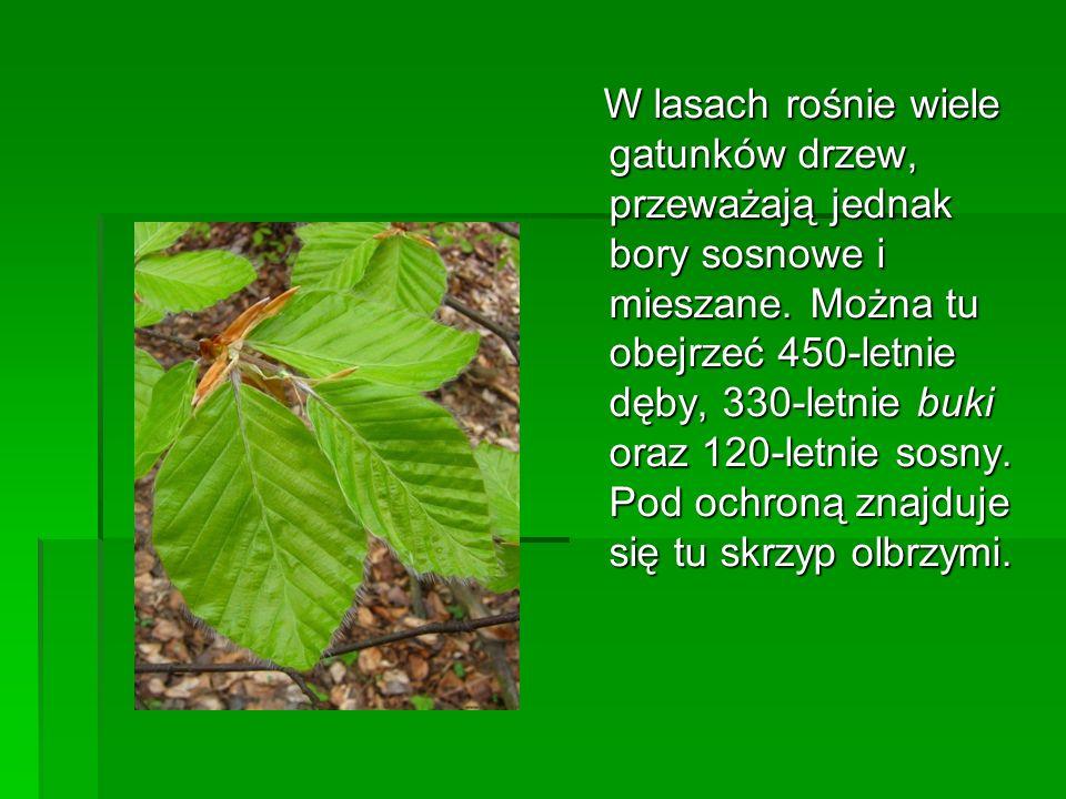 W lasach rośnie wiele gatunków drzew, przeważają jednak bory sosnowe i mieszane. Można tu obejrzeć 450-letnie dęby, 330-letnie buki oraz 120-letnie so