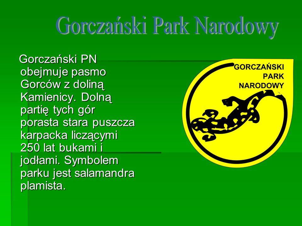 Gorczański PN obejmuje pasmo Gorców z doliną Kamienicy. Dolną partię tych gór porasta stara puszcza karpacka liczącymi 250 lat bukami i jodłami. Symbo