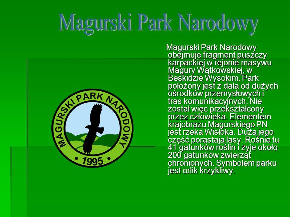 Magurski Park Narodowy obejmuje fragment puszczy karpackiej w rejonie masywu Magury Wątkowskiej, w Beskidzie Wysokim. Park położony jest z dala od duż