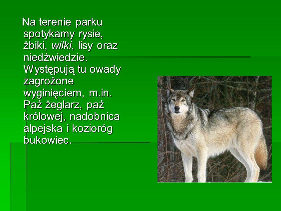 Na terenie parku spotykamy rysie, żbiki, wilki, lisy oraz niedźwiedzie. Występują tu owady zagrożone wyginięciem, m.in. Paź żeglarz, paź królowej, nad