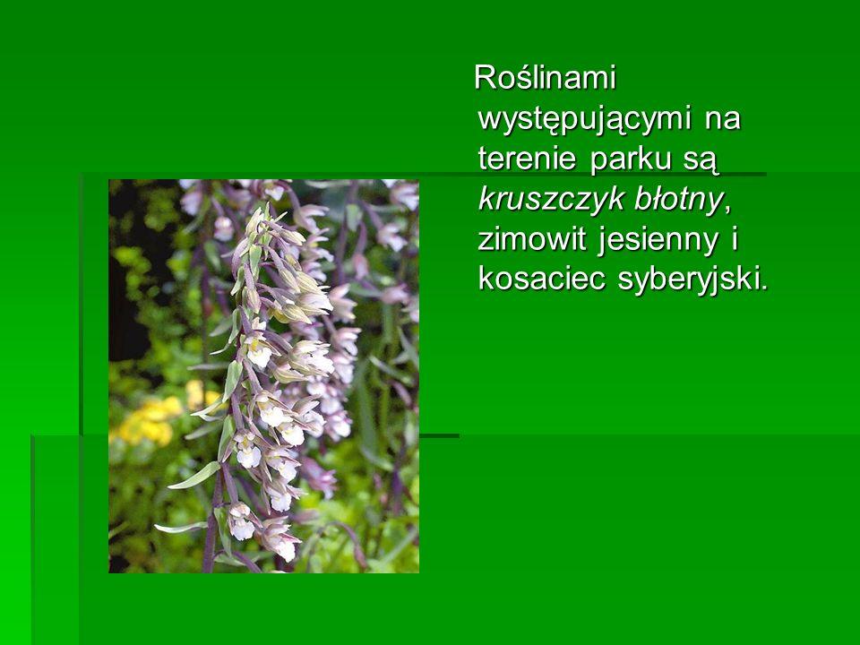 Roślinami występującymi na terenie parku są kruszczyk błotny, zimowit jesienny i kosaciec syberyjski. Roślinami występującymi na terenie parku są krus