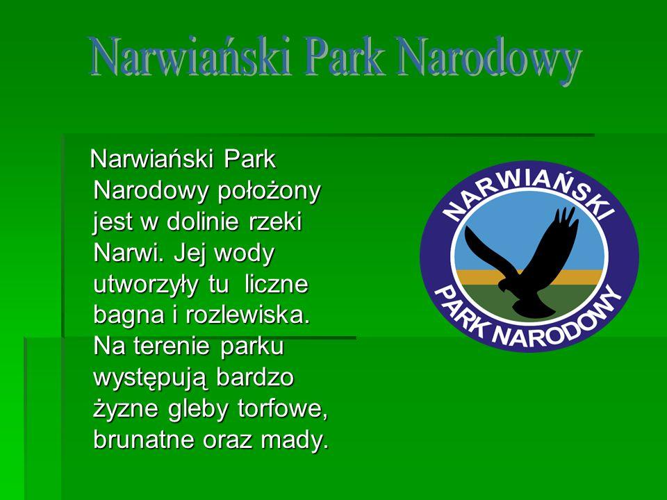 Narwiański Park Narodowy położony jest w dolinie rzeki Narwi. Jej wody utworzyły tu liczne bagna i rozlewiska. Na terenie parku występują bardzo żyzne