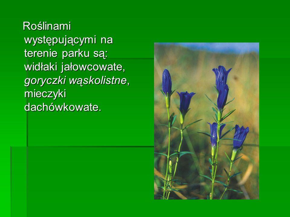 Roślinami występującymi na terenie parku są: widłaki jałowcowate, goryczki wąskolistne, mieczyki dachówkowate. Roślinami występującymi na terenie park