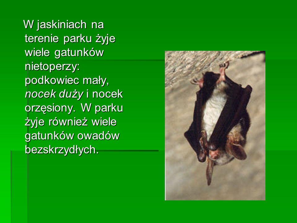 W jaskiniach na terenie parku żyje wiele gatunków nietoperzy: podkowiec mały, nocek duży i nocek orzęsiony. W parku żyje również wiele gatunków owadów