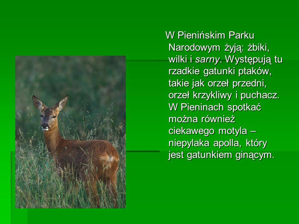 W Pienińskim Parku Narodowym żyją: żbiki, wilki i sarny. Występują tu rzadkie gatunki ptaków, takie jak orzeł przedni, orzeł krzykliwy i puchacz. W Pi
