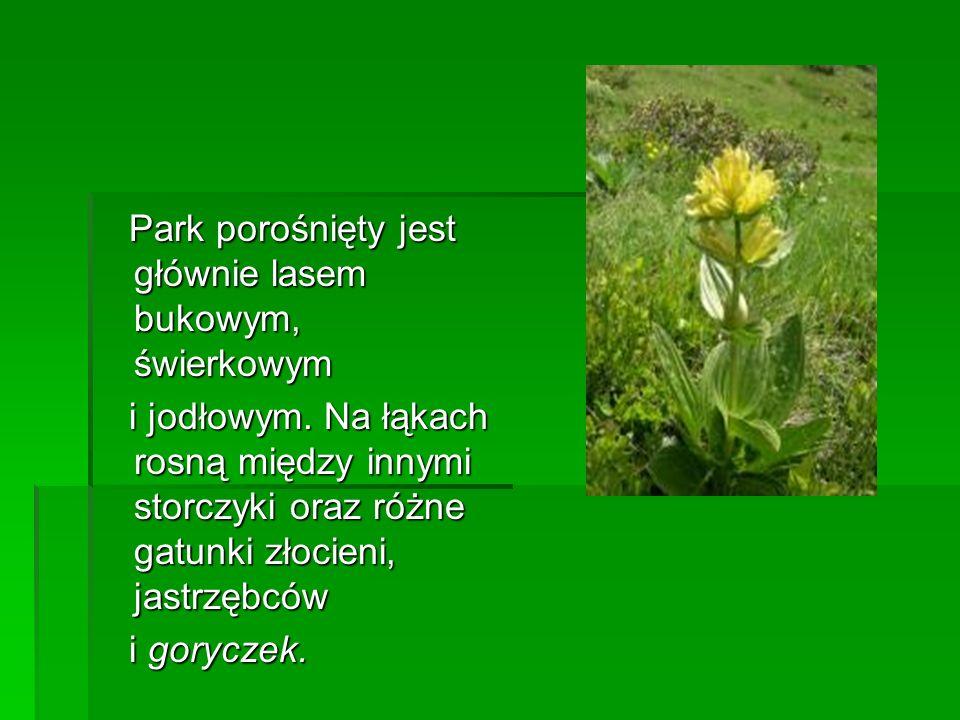 Park porośnięty jest głównie lasem bukowym, świerkowym Park porośnięty jest głównie lasem bukowym, świerkowym i jodłowym. Na łąkach rosną między innym