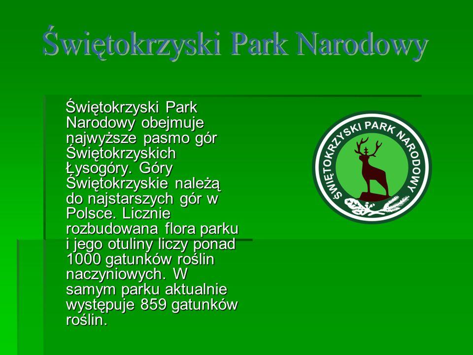 Świętokrzyski Park Narodowy obejmuje najwyższe pasmo gór Świętokrzyskich Łysogóry. Góry Świętokrzyskie należą do najstarszych gór w Polsce. Licznie ro