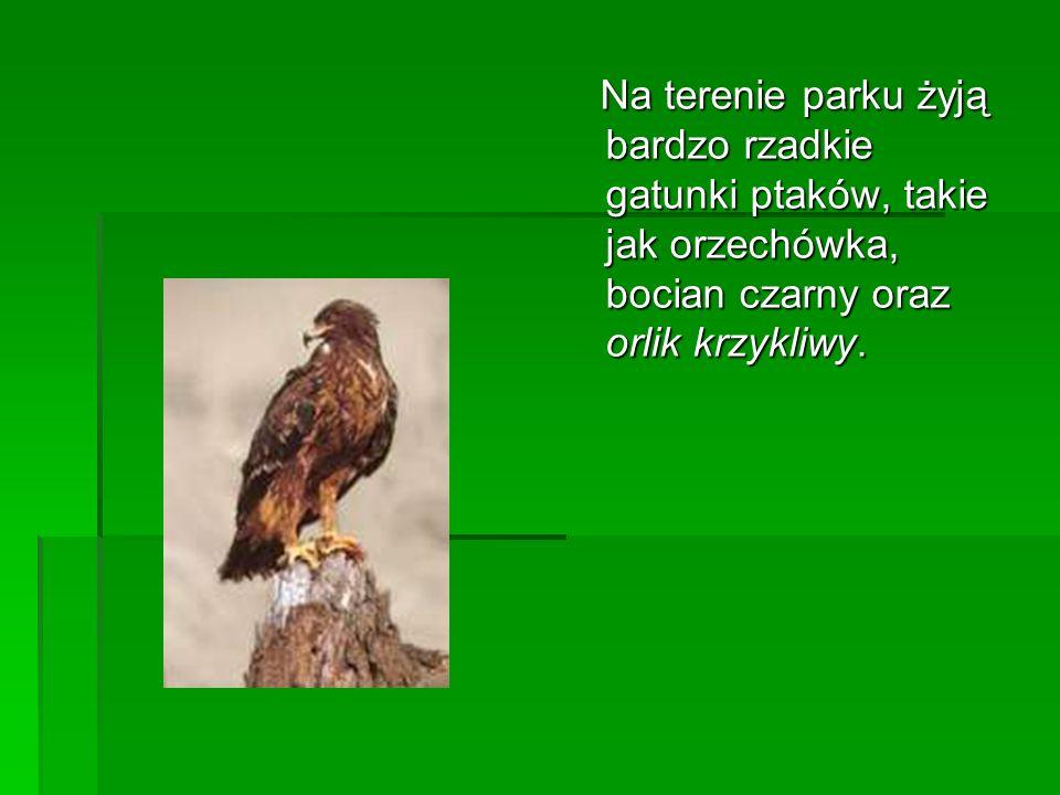 Na terenie parku żyją bardzo rzadkie gatunki ptaków, takie jak orzechówka, bocian czarny oraz orlik krzykliwy. Na terenie parku żyją bardzo rzadkie ga