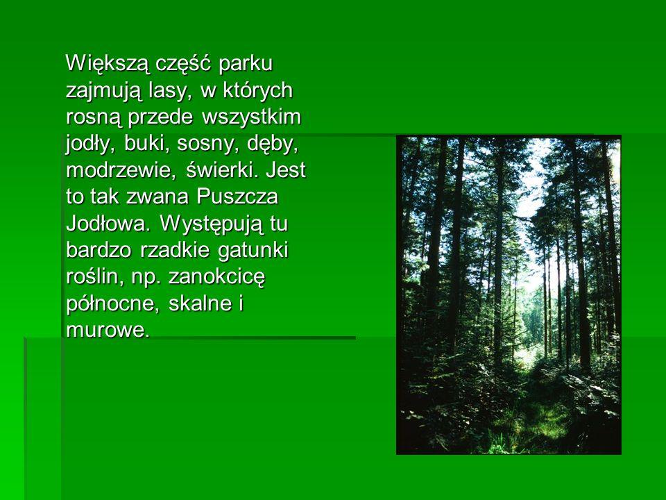 Większą część parku zajmują lasy, w których rosną przede wszystkim jodły, buki, sosny, dęby, modrzewie, świerki. Jest to tak zwana Puszcza Jodłowa. Wy