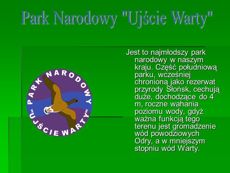 Jest to najmłodszy park narodowy w naszym kraju. Część południową parku, wcześniej chronioną jako rezerwat przyrody Słońsk, cechują duże, dochodzące d