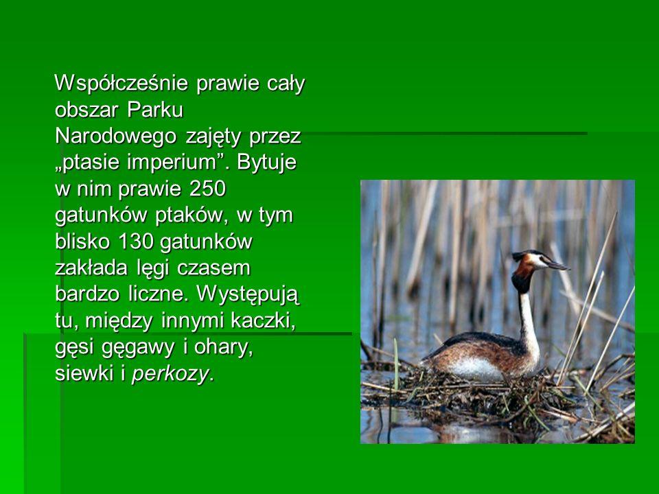 Współcześnie prawie cały obszar Parku Narodowego zajęty przez ptasie imperium. Bytuje w nim prawie 250 gatunków ptaków, w tym blisko 130 gatunków zakł